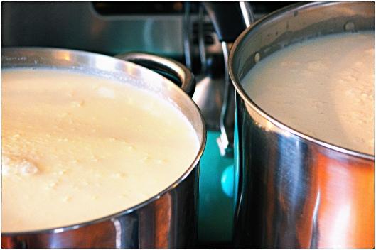 Milk Ripening
