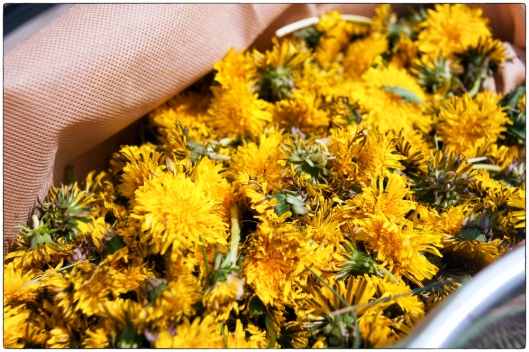 Bag of Dandelions